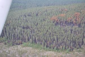 Ilmakuva Jaurujoen paloalueesta. Kuva: Sauli S