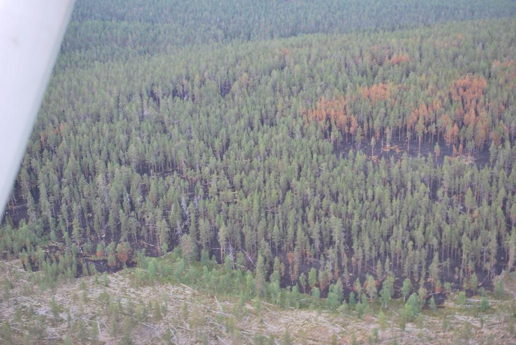 Ilmakuva Jaurujoen paloalueesta. Kuva: Sauli